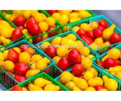 Praca w Holandii sortownie/pakownie warzyw i owoców