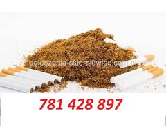 tytoń papierosowy 65zł kg duży wybór 781 428 897